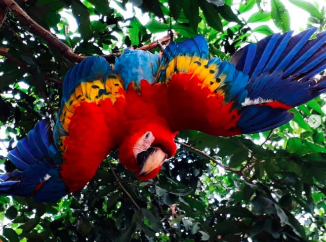 Biodiversity in God's creation